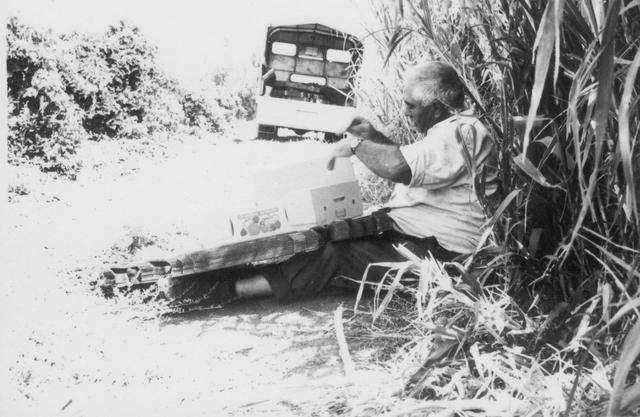 פנחס ג'ינו החקלאי ליד מטעי המנגו במגדל
