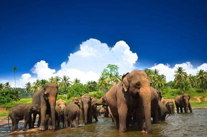 bigstock-Elephants-in-beautiful-landsca-47812958.jpg